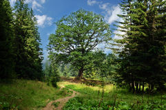 Paesaggio con il percorso all'albero di vita solo Immagini Stock Libere da Diritti