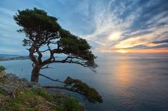 Paesaggio con il pino. Fotografie Stock