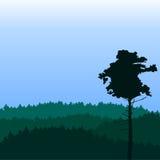 Paesaggio con il pino Fotografie Stock