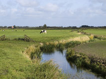 Paesaggio con il prato e le mucche Fotografia Stock