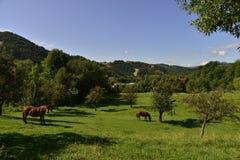 Paesaggio con il prato ed i cavalli Fotografia Stock