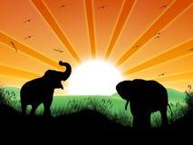 Paesaggio con il sole e gli elefanti Immagine Stock Libera da Diritti