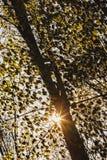 Paesaggio con il Sun che splende attraverso i rami di albero Fotografia Stock