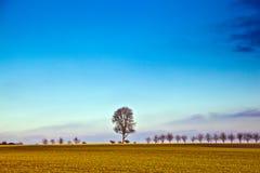 Paesaggio con l'acro e l'albero Fotografia Stock