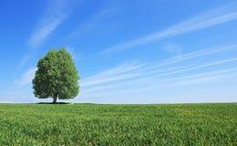 Paesaggio con l'albero fotografia stock
