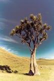 Paesaggio con l'albero Fotografia Stock Libera da Diritti
