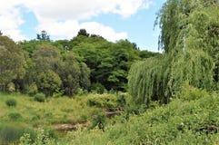 Paesaggio con l'albero di salice Fotografia Stock Libera da Diritti