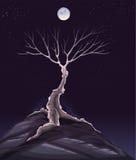 Paesaggio con l'albero nella notte. illustrazione vettoriale