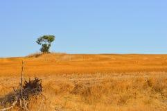 Paesaggio con l'albero solo sull'orizzonte immagine stock libera da diritti