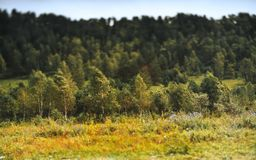 Paesaggio con la collina e la boscaglia Fotografia Stock