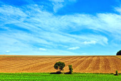Paesaggio con la fila degli alberi Fotografie Stock