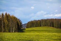 Paesaggio con la foresta Immagini Stock Libere da Diritti