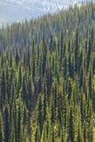 Paesaggio con la foresta in Bristish Colombia Supporto Revelstoke Ca Fotografia Stock Libera da Diritti