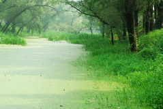 Paesaggio con la foresta e le piante acquatiche Fotografia Stock
