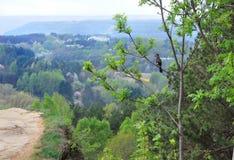 Paesaggio con la montagna e le visualizzazioni ad albero L'uccello si siede su un albero e guarda la natura immagini stock