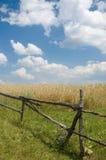 Paesaggio con la rete fissa ed il frumento Fotografie Stock Libere da Diritti