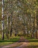 Paesaggio con la strada in foresta Fotografia Stock Libera da Diritti
