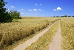 Paesaggio con la strada nel campo di frumento Fotografie Stock Libere da Diritti