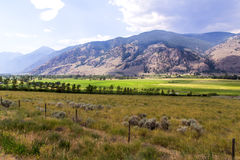 Paesaggio con le montagne Fotografia Stock