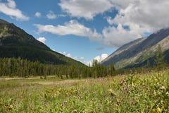 Paesaggio con le montagne della foresta immagini stock