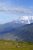 Paesaggio con le montagne e la mucca nevose di pascolo Immagini Stock
