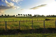 Paesaggio con le mucche Fotografia Stock