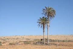 Paesaggio con le palme, Fuerteventura Immagini Stock Libere da Diritti