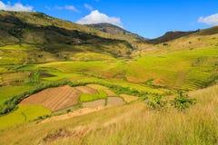 Paesaggio con le risaie nel Madagascar centrale Fotografie Stock