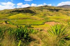 Paesaggio con le risaie nel Madagascar centrale Immagine Stock