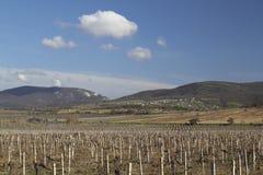Paesaggio con le vigne Fotografia Stock