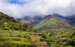 Paesaggio con le viti in parco nazionale Cinque Terre Immagini Stock Libere da Diritti