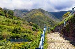 Paesaggio con le viti sul pendio di collina Immagine Stock Libera da Diritti