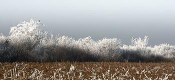 Paesaggio con nebbia di congelamento Fotografia Stock