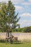 Paesaggio con Pony Foal selvaggia Fotografia Stock