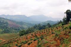 Paesaggio con tè verde Sri Lanka Immagine Stock Libera da Diritti