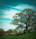 Paesaggio con un albero Fotografie Stock Libere da Diritti