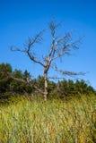 Paesaggio con un albero asciutto Fotografia Stock