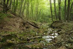 Paesaggio con un fiume della montagna in Crimea immagini stock libere da diritti