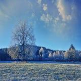 Paesaggio congelato Immagine Stock