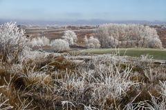 Paesaggio congelato Fotografie Stock