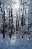 Paesaggio congelato calma di inverno con i bei alberi glassati Fotografie Stock