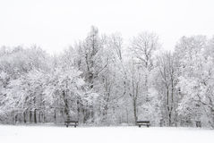 Paesaggio congelato di inverno Immagine Stock Libera da Diritti