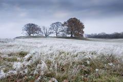 Paesaggio congelato di inverno con erba e gli alberi Fotografie Stock