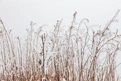 Paesaggio congelato di inverno in Sichuan, Cina fotografie stock libere da diritti
