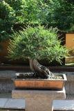 Paesaggio conservato in vaso Fotografia Stock