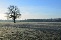 Paesaggio coperto gelo in Inghilterra Immagine Stock