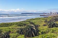 Paesaggio costiero della vegetazione della duna a Durban Sudafrica Fotografia Stock Libera da Diritti