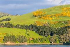 Paesaggio costiero di regione della Nuova Zelanda Otago Immagine Stock