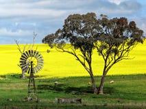 Paesaggio d'agricoltura australiano con il mulino a vento d'annata Immagini Stock Libere da Diritti
