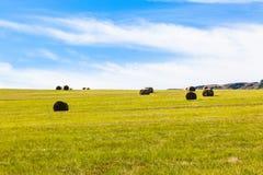 Paesaggio d'agricoltura blu delle balle dell'erba verde Immagine Stock